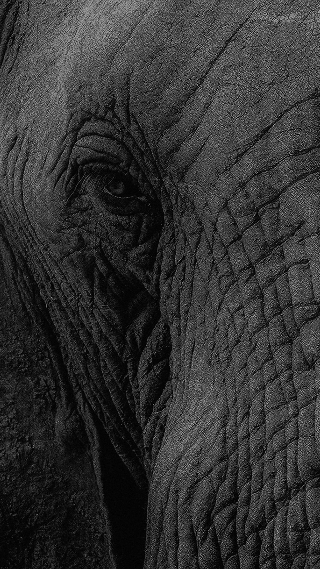 Elephant Eye Animal Nature Android wallpaper