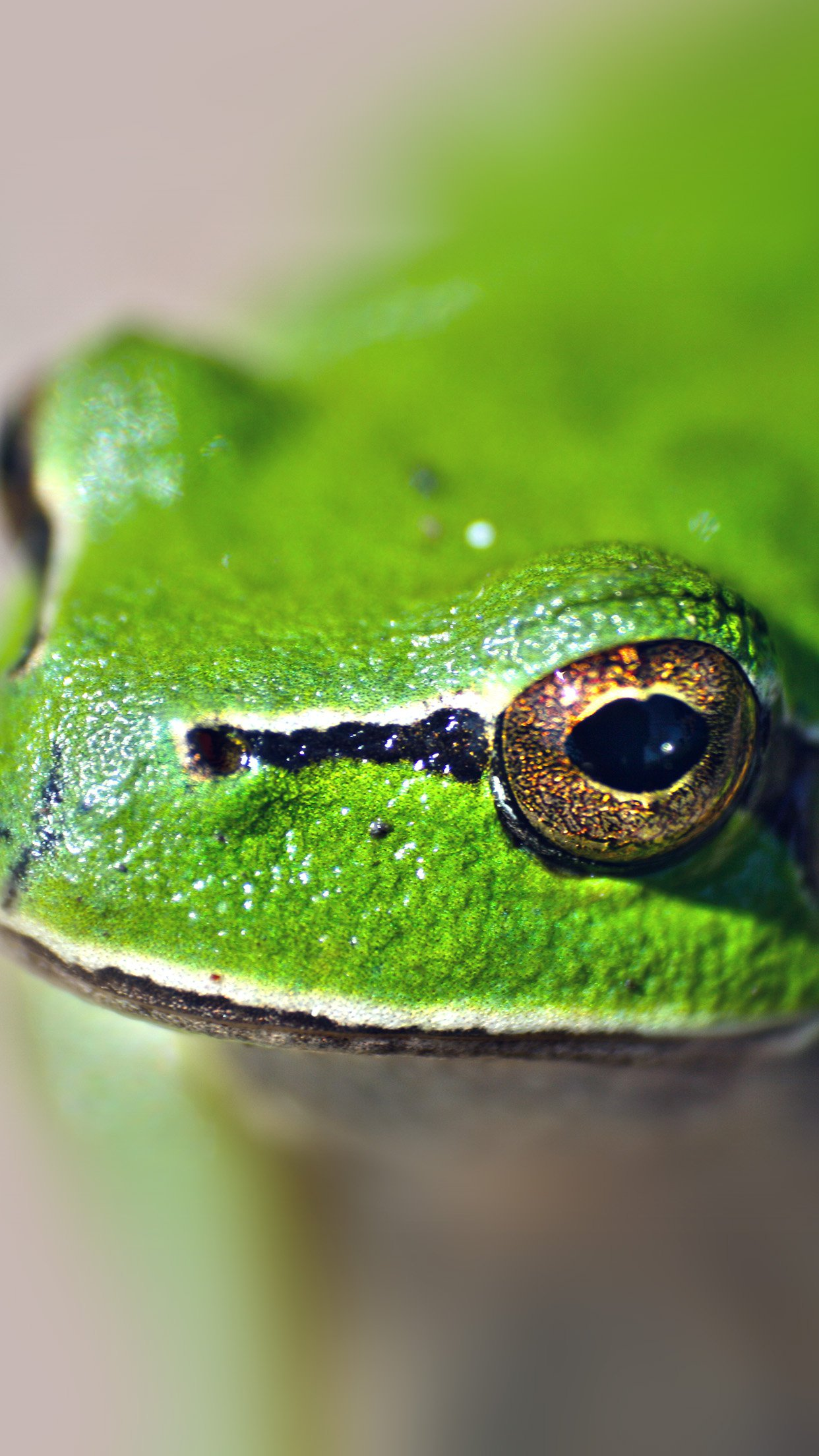 Eyes Frog Animal Lake Nature Android wallpaper