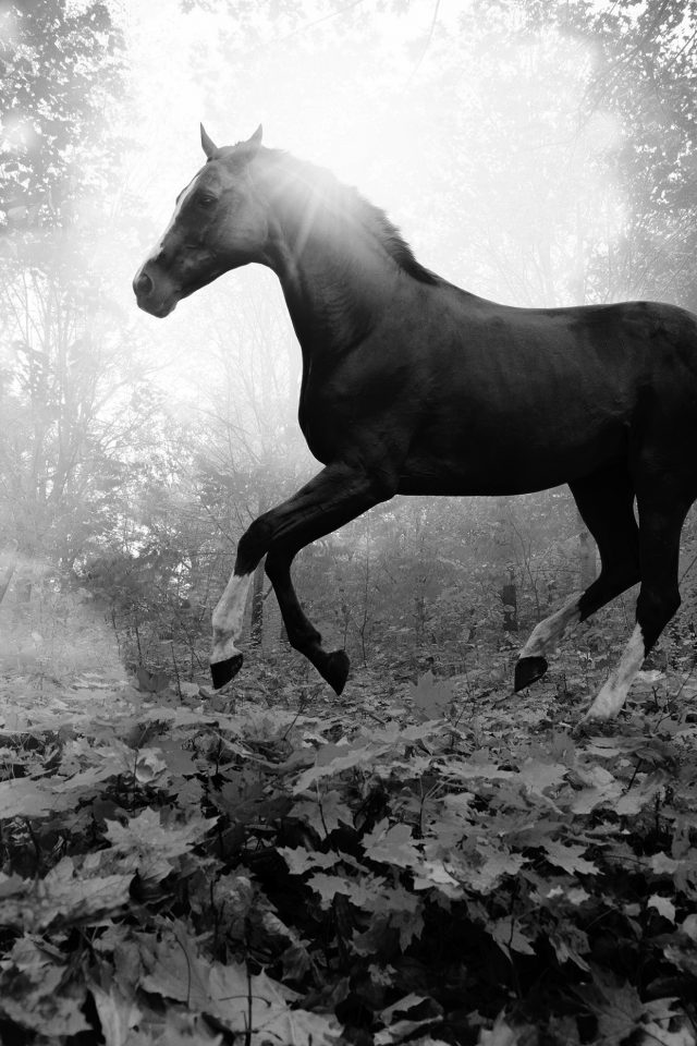 Horse Art Animal Fall Leaf Mountain Flare Dark Bw Android wallpaper