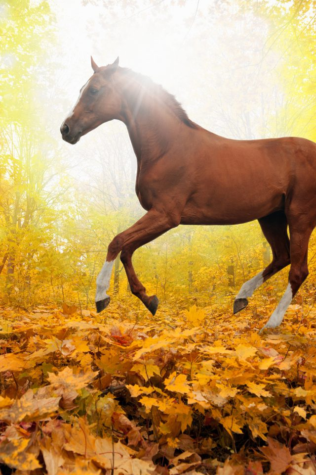 Horse Art Animal Fall Leaf Mountain Red Android wallpaper