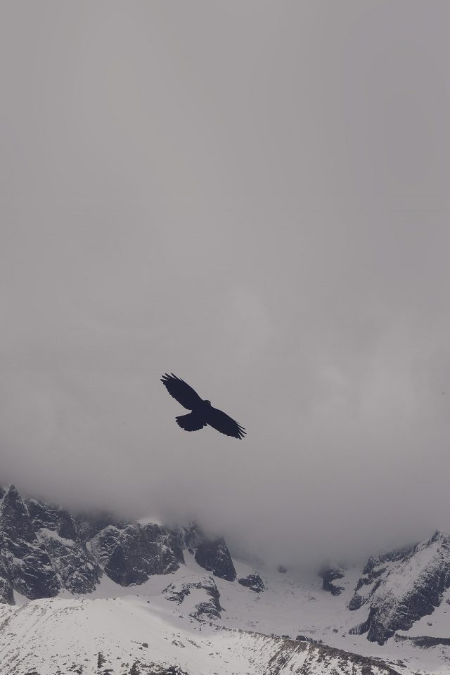 Julia Revitt Eagle Blue Mountain Winter Snow Nature Animal Android wallpaper