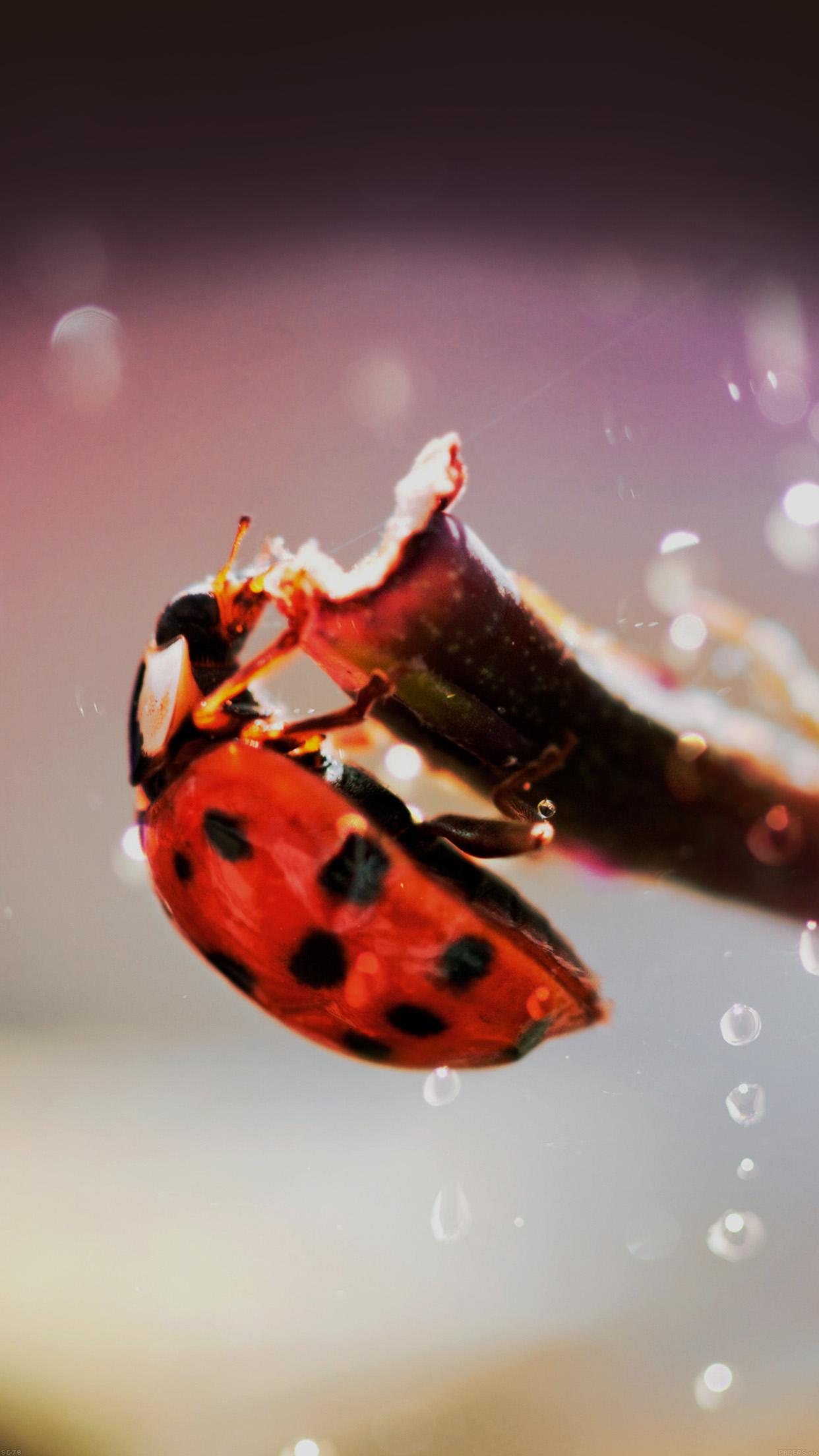 lady bug macro zoom animal