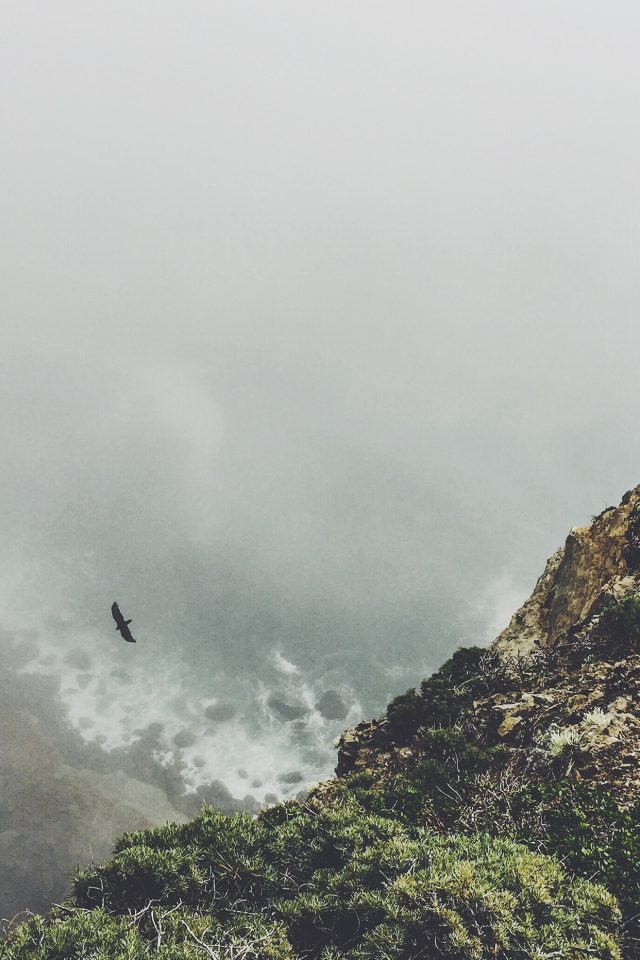 Mountain Bird Cliff Animal Fog Cloud Android wallpaper