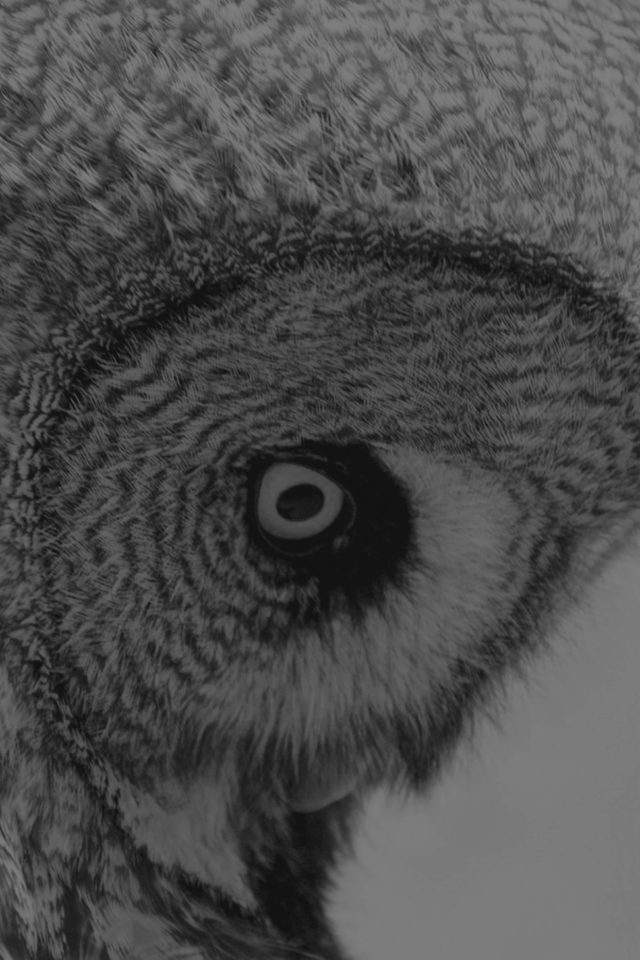Owl Eye Bw Dark Animal Nature Android wallpaper