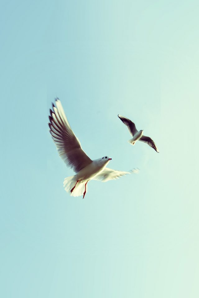 Pigeons Bird Fly Sky Animal Nature Minimal Android wallpaper