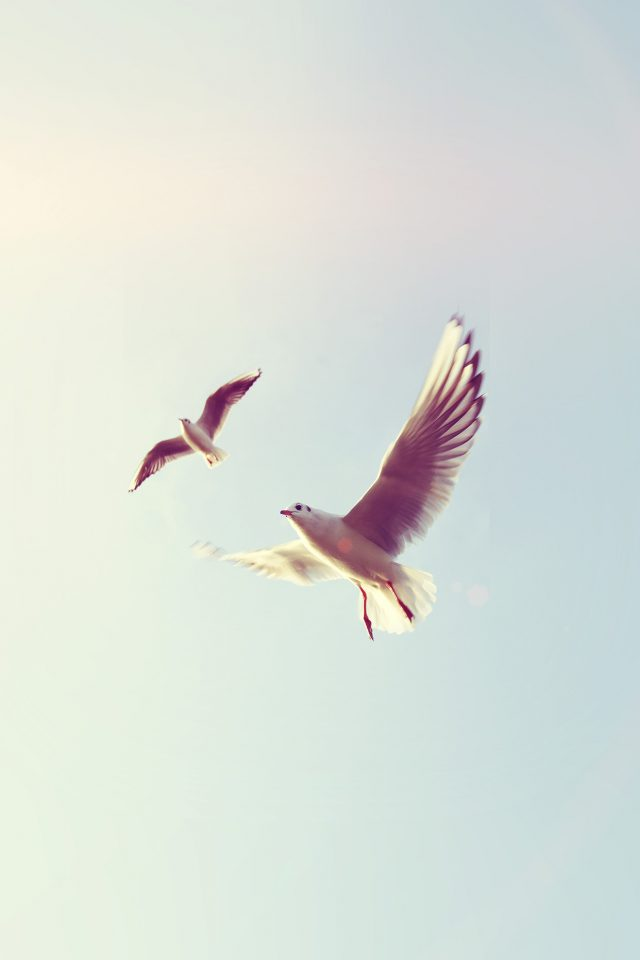 Pigeons Bird Fly Sky Animal Nature Minimal Flare Android wallpaper
