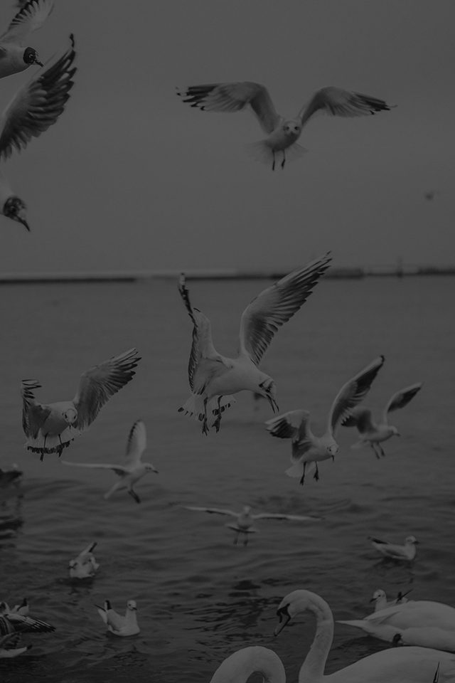Seagull Sea Beach Port Black Nature Animal Android wallpaper