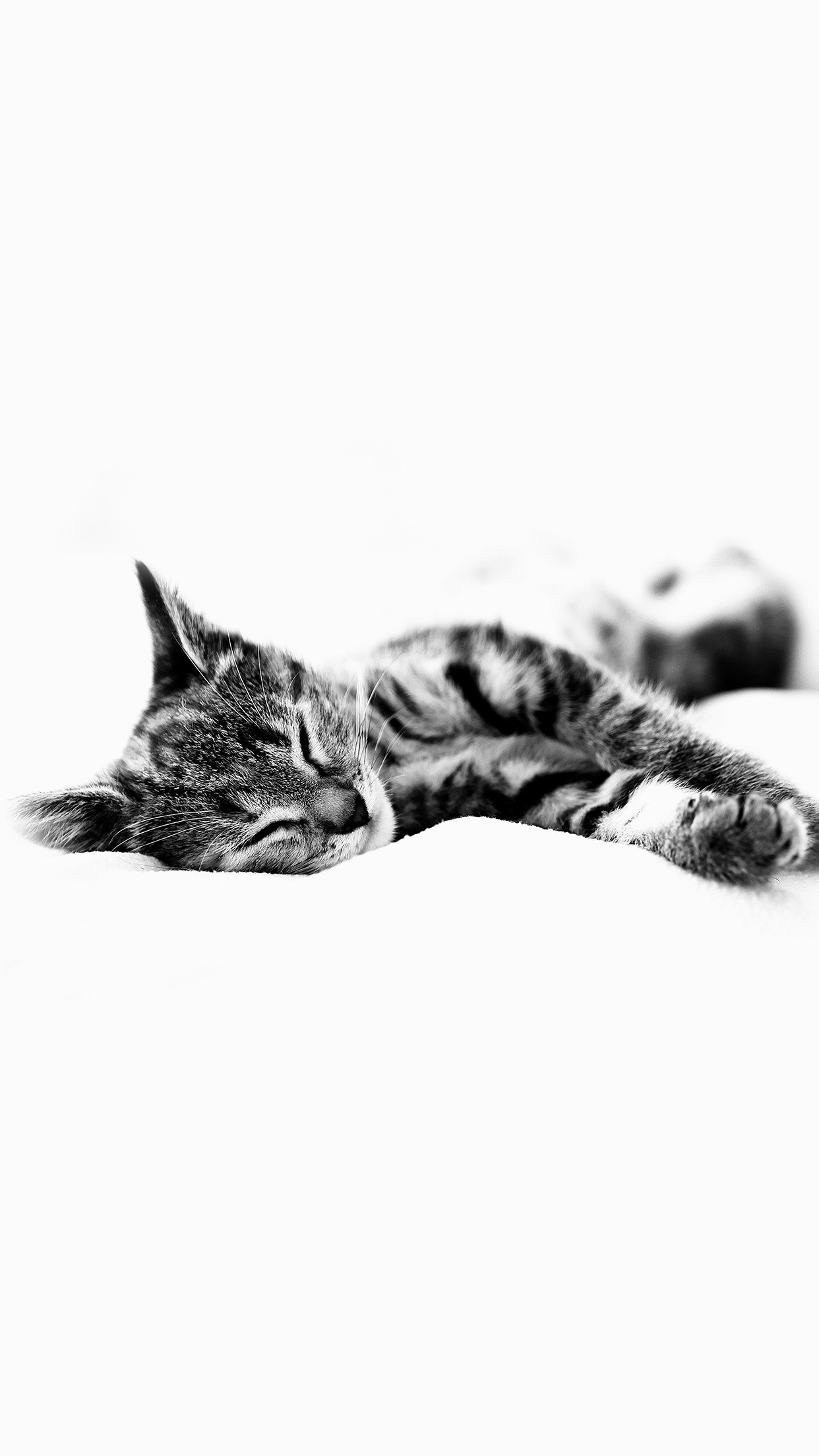 Sleepy Cat Kitten White Animal Android wallpaper