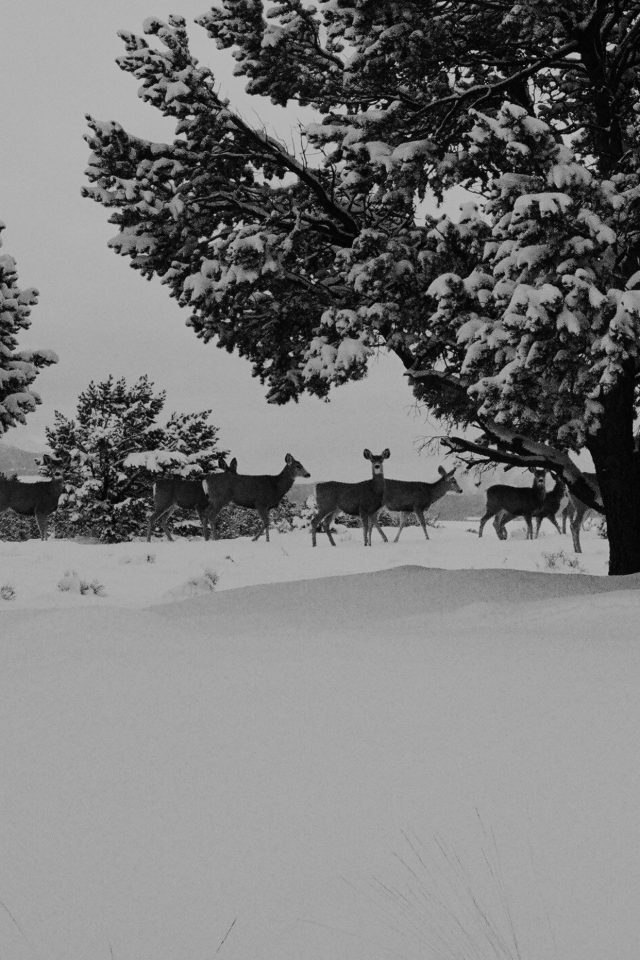 Snow Deer Winter Nature Animals Android wallpaper