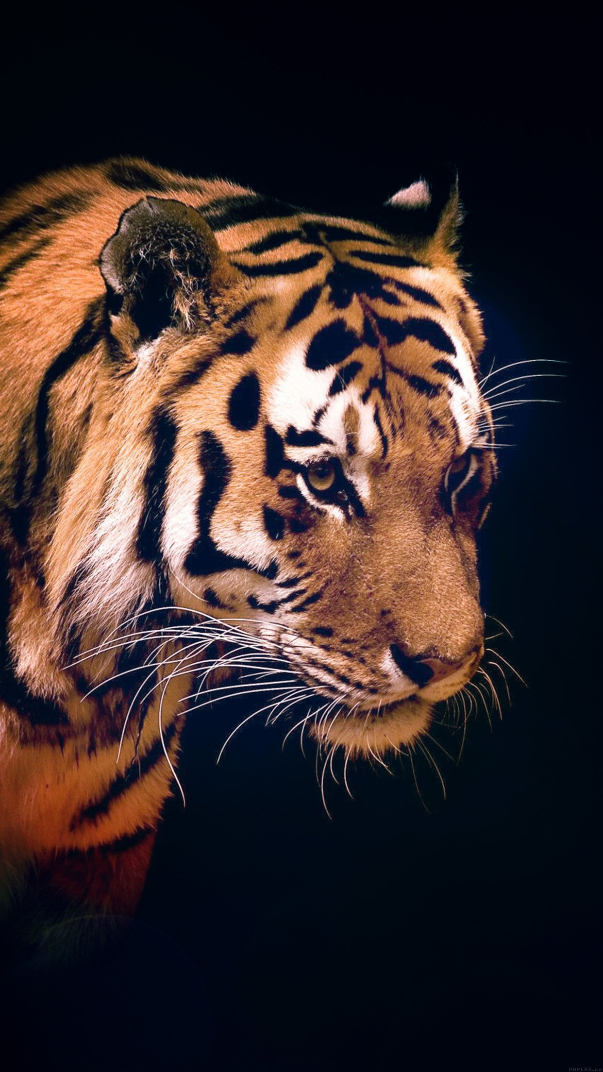 Tiger Dark Animal Love Nature Android wallpaper