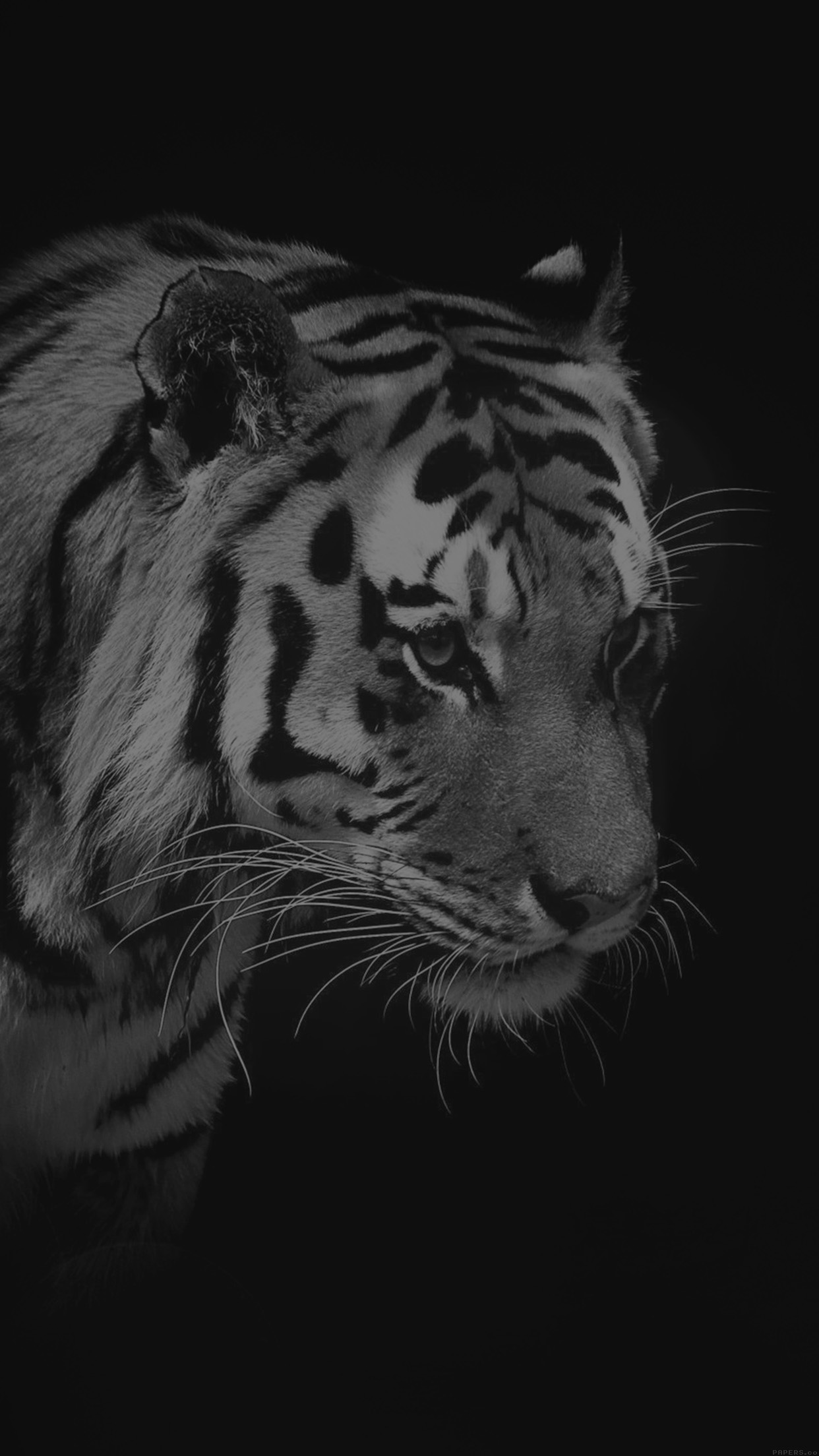 Tiger Dark Bw Animal Love Nature Android Wallpaper