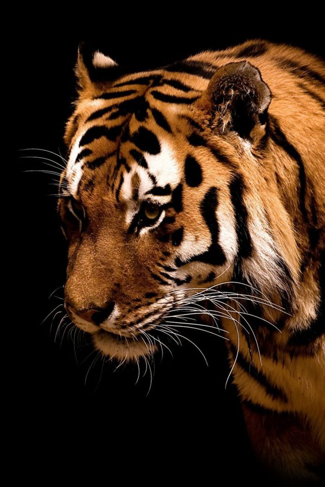 Tiger Jk Dark Animal Love Nature Android wallpaper