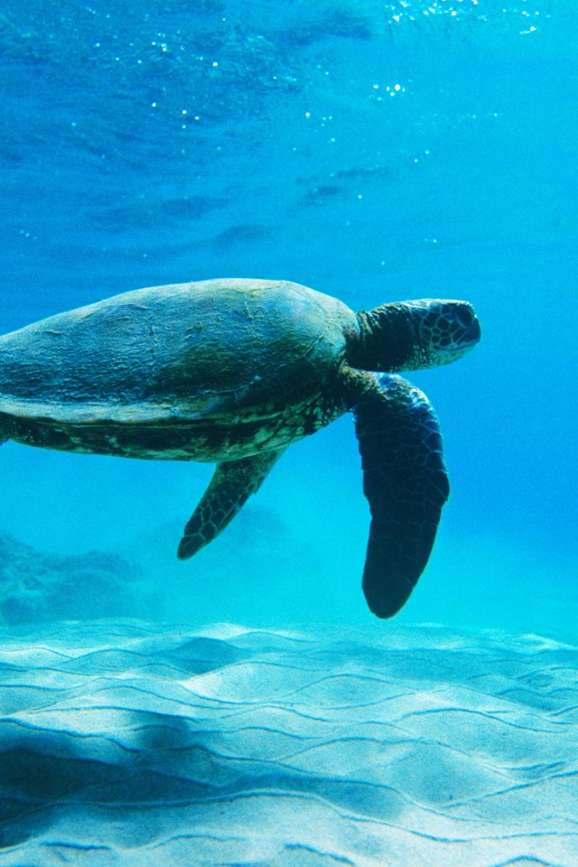 Turtle Sea Ocean Animal Android wallpaper