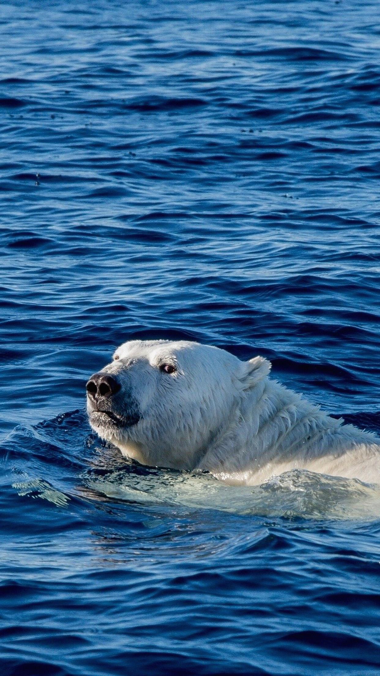 Watch Me Swim Polar Bear Sea Animal Android Wallpaper Android Hd