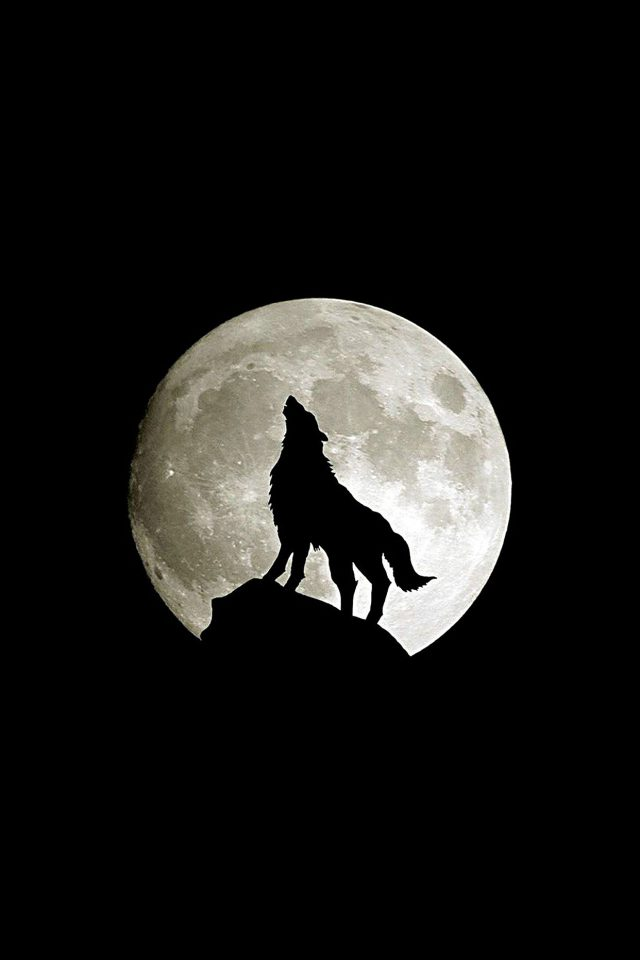 Wolf Howl Animal Dark Minimal Nature Android wallpaper